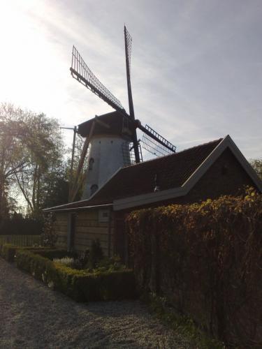 molens-hoeksche-waard-1